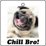 Pug Dog Chill Bro