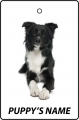 Personalised Border Collie Puppy