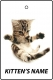 Personalised American Shorthair Kitten